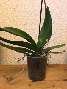 cuidado de plantas con maceta transparente