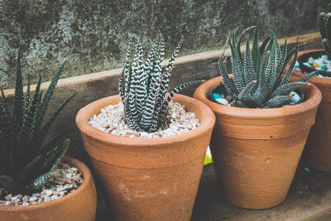 cuidado de plantas y suculentas