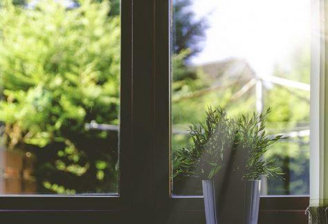 cuidado de plantas con luz o poca luz