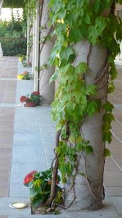 trepadora para decorar una columna
